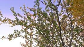 Beautiful blossoming apple-tree garden. Beautiful summer  landscape. stock video footage