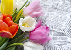 Beautiful blossoming colorful tulip flowers on collages of text snippets. Floral design. Nature background. Spring background with Royalty Free Stock Photo