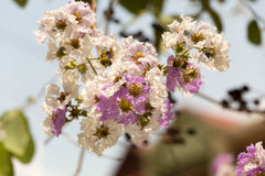 Beautiful blossoming flowers Royalty Free Stock Photography