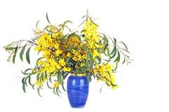 Beautiful blossoming mimosa Stock Photos