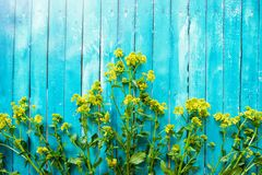 Beautiful blue background with yellow wildflowers Stock Photo