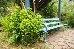 Beautiful blue bench and green flowers Stock Photos