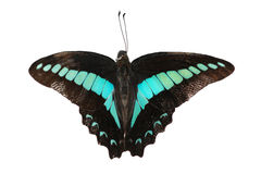 Beautiful blue and black butterfly stock photo