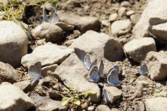 Butterflies. Summer. The natural beauty of Russia royalty free stock photography