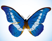 Beautiful Blue Butterfly Royalty Free Stock Photos