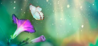 Beautiful blue butterfly and blossoming petinia in spring at Sunrise on blue and pink background macro. Amazing elegant artistic stock photos
