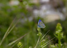 Beautiful blue butterfly Royalty Free Stock Photo