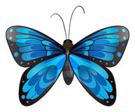 A beautiful blue butterfly Royalty Free Stock Photo
