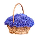 Beautiful blue cornflowers in a basket Stock Photos