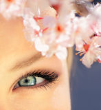Beautiful blue eye Stock Photography