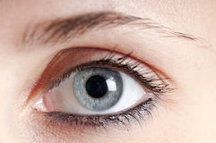 Beautiful blue eye girl Stock Photos