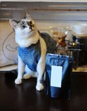 Beautiful blue-eyed cat in denim vest with pack of coffee. Empty label, space for design. Alternative brewing. Beautiful blue-eyed cat in denim vest with pack of Stock Image