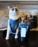 Beautiful blue-eyed cat in denim vest with pack of coffee. Empty label, space for design. Alternative brewing. Beautiful blue-eyed cat in denim vest with pack of Stock Photos