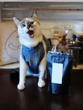 Beautiful blue-eyed cat in denim vest with pack of coffee. Empty label, space for design. Alternative brewing. Beautiful blue-eyed cat in denim vest with pack of Stock Photography