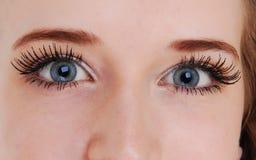 Beautiful blue eyes. Royalty Free Stock Image