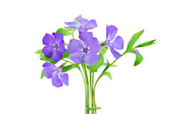 Beautiful blue flower Stock Images