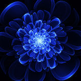 Beautiful blue flower on black background. Computer generated gr Stock Images