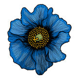 Beautiful blue flower Royalty Free Stock Photo