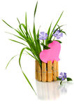 Beautiful blue flower and pink heart Royalty Free Stock Photos