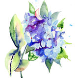 Beautiful blue flowers. Watercolor illustration Royalty Free Stock Images