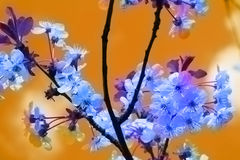 Beautiful blue flowers Stock Image