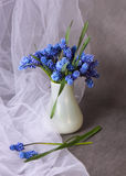 Beautiful blue flowers. In the white vase royalty free stock images