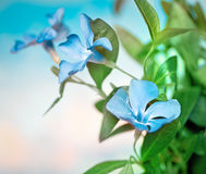 Beautiful blue flowers background Royalty Free Stock Photography