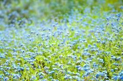 Beautiful blue flowers background Stock Photos
