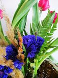 Bouquet of cornflowers and tulips close up. stock image