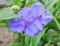 Beautiful blue flowers Royalty Free Stock Photos