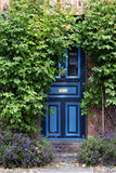 Beautiful blue front door in an old brick house overgrown  Royalty Free Stock Photos