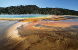 Beautiful Blue Grand Prismatic Springs Yellowstone Royalty Free Stock Images