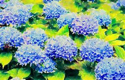 Beautiful blue hydrangeas, watercolor illustration. Blue hydrangeas, watercolor illustration, beautiful flowers bloom in the garden, summer day, June July stock illustration