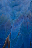 Beautiful Blue Macaw Feathers Royalty Free Stock Images