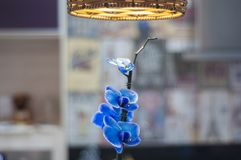 a beautiful blue orchid flower Royalty Free Stock Image