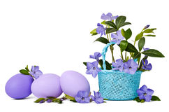 Beautiful blue periwinkle in the basket and violet easter eggs Stock Image