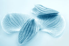 Beautiful blue petals Royalty Free Stock Images