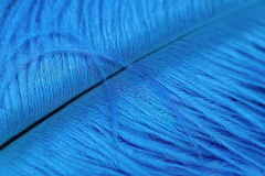 Beautiful blue quill Stock Image