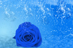 Beautiful blue rose, a lot of ice and water royalty free stock images