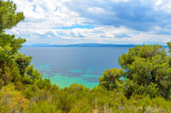 Beautiful blue sea behind conifers Royalty Free Stock Image
