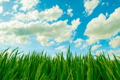 Beautiful blue sky and white cloudy background over the green field in countryside landscape of Thailand. Beautiful blue sky background and white cloudy over royalty free stock images