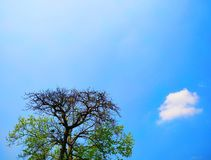 Beautiful Blue Sky And The Big Tree. Beautiful blue sky big tree royalty free stock images