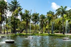 Babassu Palms at 13 Maio / May Park, Recife, Pernambuco, Brazil. Beautiful blue sky day with Babassu Palms at 13 Maio / May Park, Recife, Pernambuco, Brazil stock photo