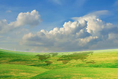 Beautiful Blue Sky With Green Grass Field Royalty Free Stock Photo