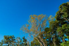 Up view of green and yellow trees on blue sky background. Beautiful blue sky and trees in forest Stock Photos