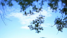 Beautiful blue sky with white clouds and green tree branches on foreground.  stock video footage