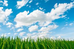 Beautiful blue sky and white cloudy background over the green field in countryside landscape of Thailand. Beautiful blue sky background and white cloudy over royalty free stock photo