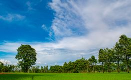 Beautiful blue sky and white cloudy background over the green trees, countryside landscape of Thailand looks fresh and bright. Amazing blue sky and white cloudy Stock Photo