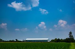 Beautiful blue sky and white cloudy background over the. Beautiful blue sky and white cloudy sky background over the local factory and rice field in countryside stock image