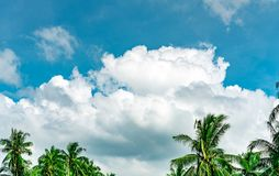 Beautiful blue sky and white cumulus clouds against coconut tree in happy and chill out day. While away time on tropical summer. Vacation concept. Top of stock photo